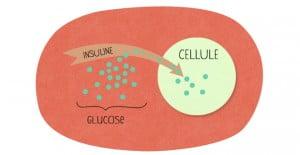 L'Insuline fait pénétrer le glucose dans les cellules