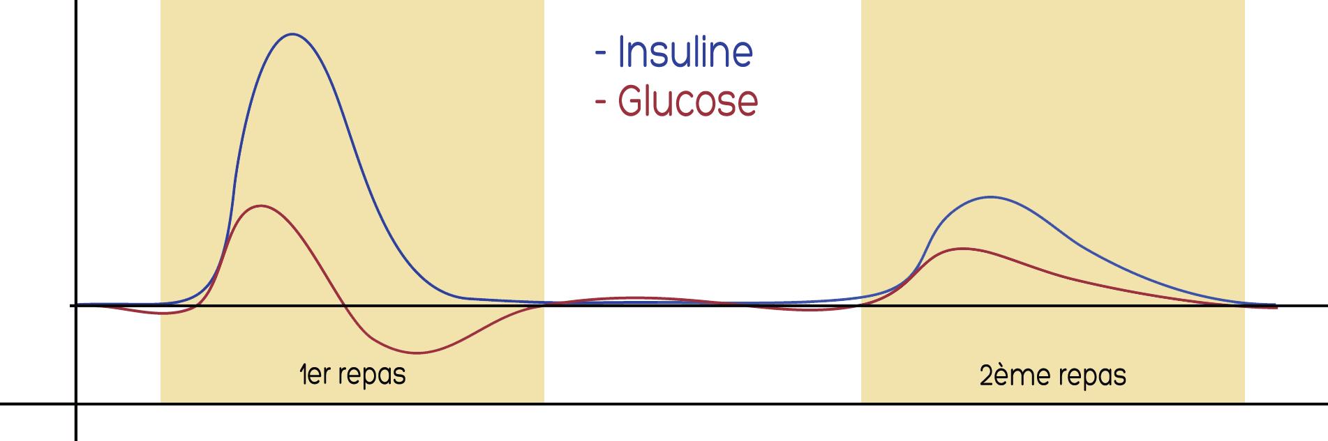 Variation de l'insuline en fonction du glucose sanguin