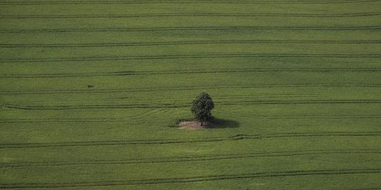 Agrobiodiversité