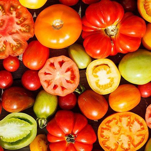 miniature_tomate