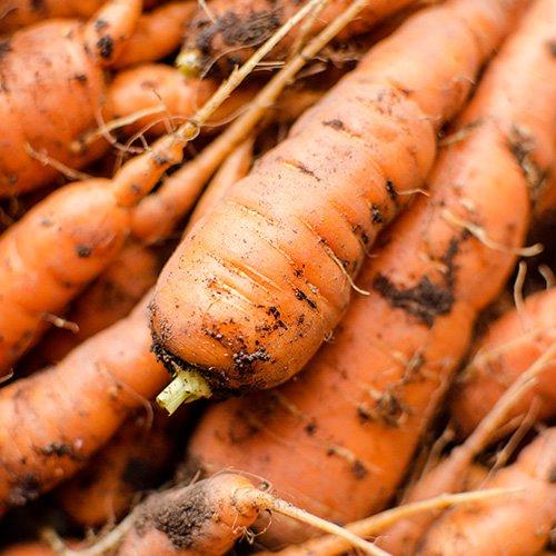 miniature_carotte
