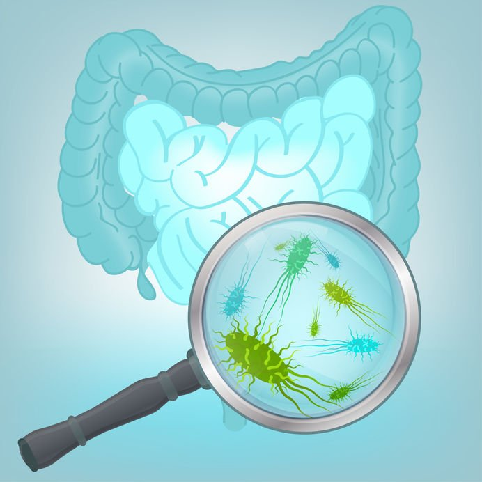 Microbiote et flore bactérienne