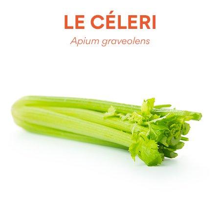 Céleri