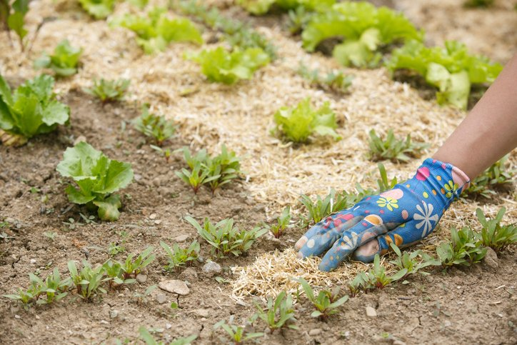 Potager - Couverture permanente du sol