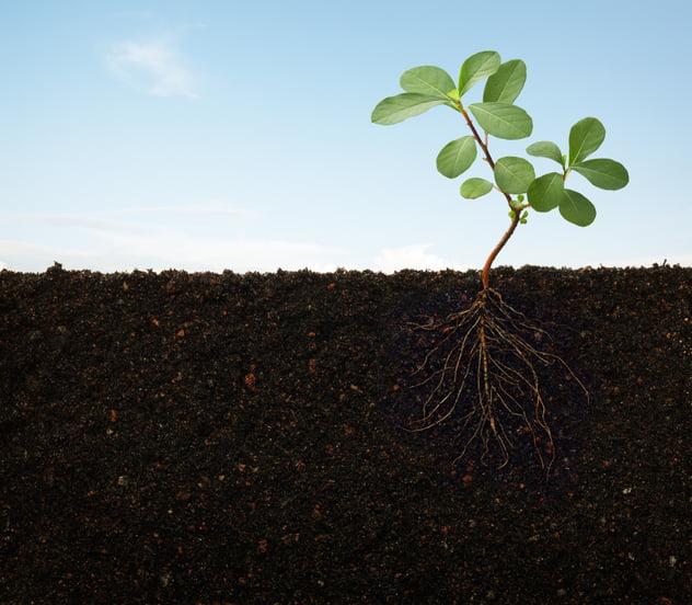 Plantes dépendantes de la vie du sol