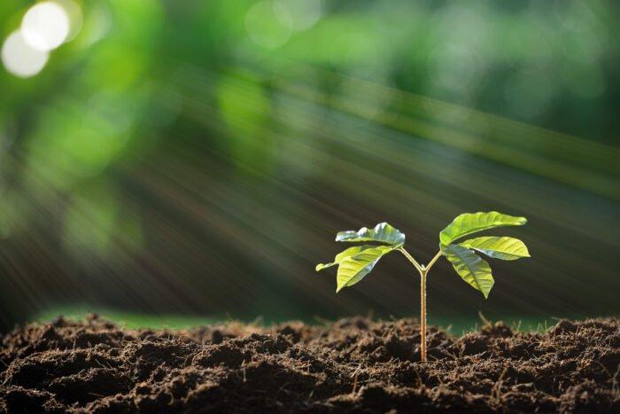 Plante, Soleil et eau