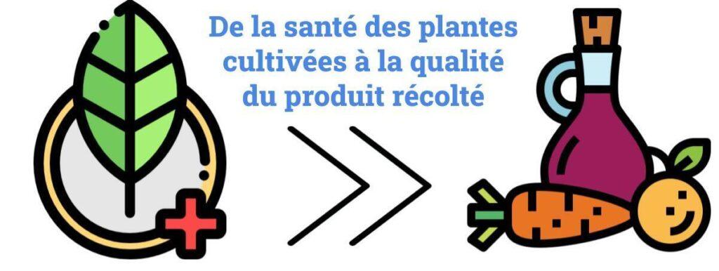 Santé des plantes cultivées