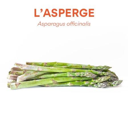 Asperge